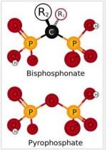 bisphosphonates-150x210