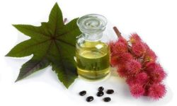 Castor Oil: An Essential For Health