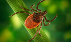 Lyme Borreliose And Its Biological Medicine Treatment