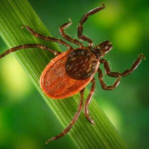 Lyme Disease: Can Lyme Disease Be Cured?
