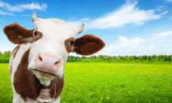 Changing Our Beliefs About Dairy