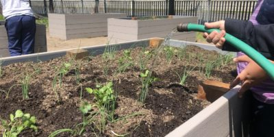 Garden Beds Being Watered By NBPS Students